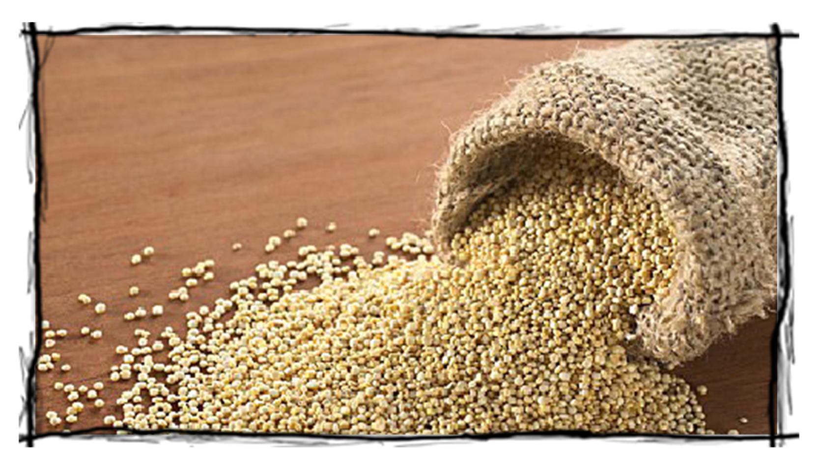 Le quinoa par Carmen Ponce